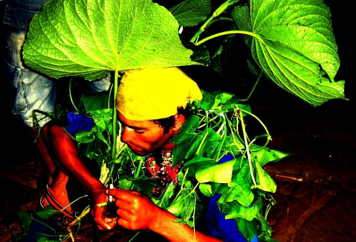 O homem-couve (na verdade, homem-taioba), que encontramos em Tiradentes. (Foto: CMC)