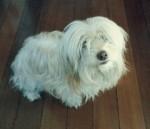 Kika, a cachorrinha mais inteligente do planeta.
