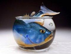 peixe apertado 1