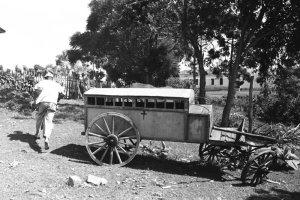 Cadáveres eram retirados no carrinho de tração animal.