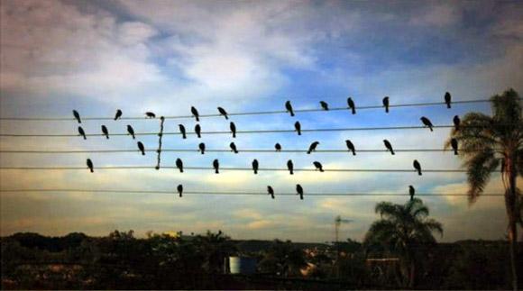 Foto de Paulo Pinto.