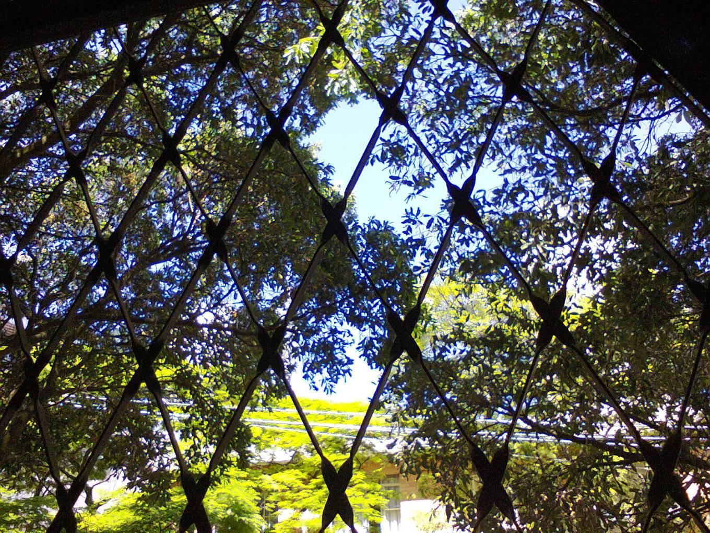 A vista, cheia de árvores e passarinhos. (Foto: CMC)