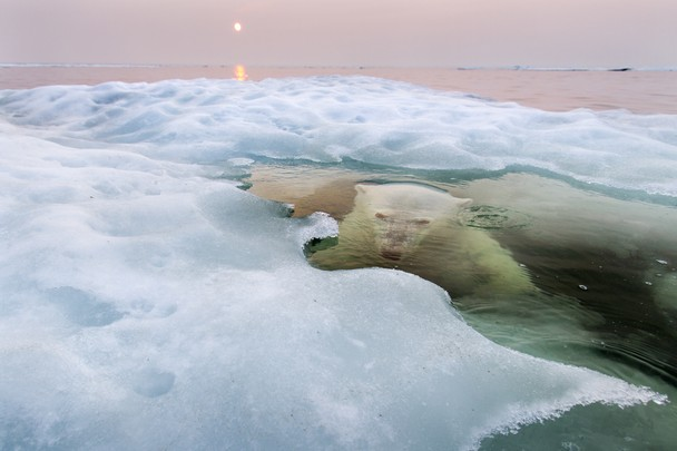 Grande prêmio e vencedor na categoria Natureza. Fotógrafo: Paul Souders. Local: Hudson Bay, Manitoba, Canada.