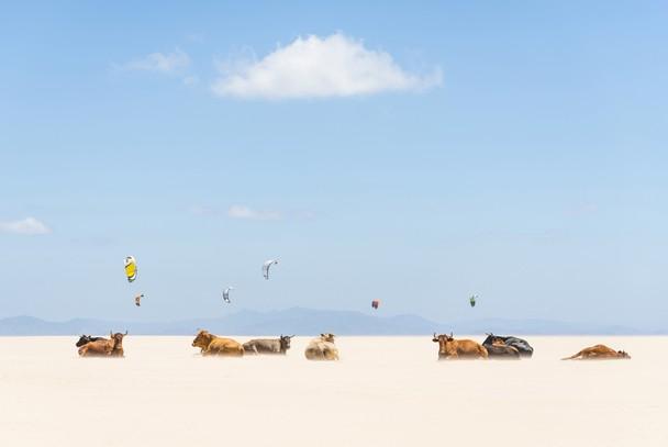 Búfalos tomando sol na praia; foto de Andrew Lever, em Andaluzia, Espanha.