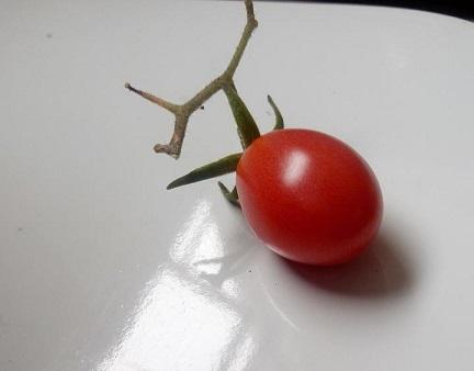 tomatim2