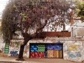 Grafite na rua do Ouro, no bairro Serra. Fotografado por CMC em 25.10.2014
