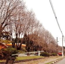 E lá se vai o bondinho. Ao lado, árvores da fortuna, com poucas folhas neste ponto da rua