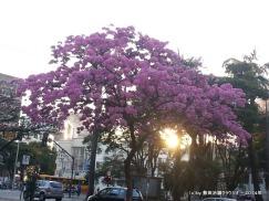 Foto de Claudio D. Shikida, tirada na avenida Brasil, em agosto/2014.