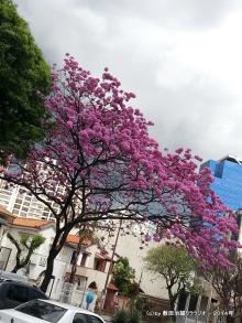 Foto de Claudio D. Shikida, tirada na avenida Brasil perto da avenida Afonso Pena, em agosto/2014.