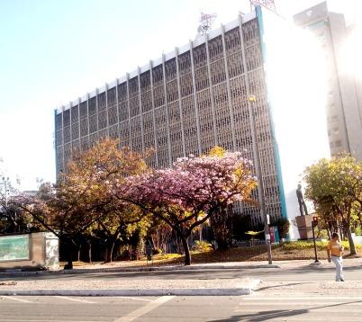 Ipê na Afonso Pena com Contorno, em foto de CMC, em 13.9.2014