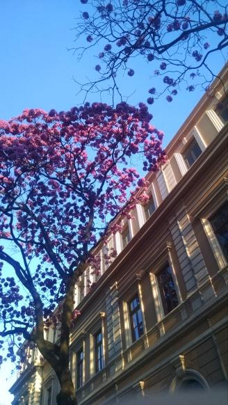 Foto de Bruna Carmona, tirada em 9.8.2014 nas imediações da Praça da Liberdade.