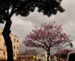 Foto tirada por mim, na avenida Amazonas, em 14.8.2014.