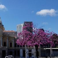 Foto tirada por Mathias Furtado de Freitas na praça da Estação, em frente ao Museu de Artes e Ofícios.