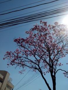 Foto tirada por CMC na rua Monte Alegre, no Serra, em 22.8.2014.