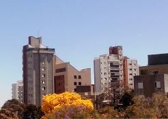 Ipê flagrado em alguma rua do bairro Serra por CMC, em 10.9.2014