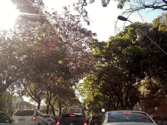 Ipê na avenida do Contorno, em frente ao Colégio Marconi. Foto de CMC, em 12.9.2014
