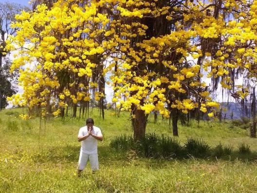 Foto enviada por Fabrizio Miranda, tirada no inverno de 2013, na BR-415, entre Ibicaraí a Itabuna (Bahia). Segundo ele, o ipê ainda não floresceu neste ano :)