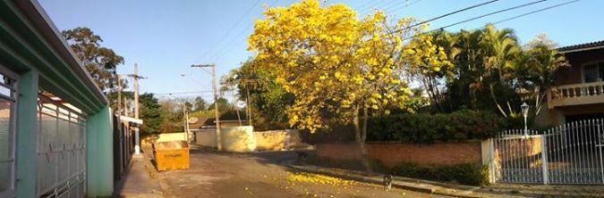 Foto enviada por Homero Ottoni e registrada por sua tia, em Atibaia, Vila Gardênia :)