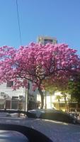 Foto de Márcia Figueiredo, tirada na avenida Brasil, em BH.
