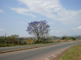 Ipê fotografado por Dea Carvalho em sarzedo, em 12.9.2015