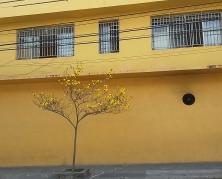 Ipê no bairro Floresta, leste de BH, clicado por CMC em 22.8.2017