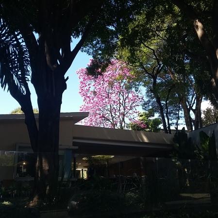Foto de CMC na rua Grão Mogol, Carmo, centro-sul de BH, no dia 5.8.2017