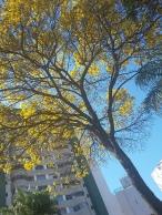 Foto de CMC na avenida Francisco Deslandes, Anchieta, centro-sul de BH, no dia 20.8.2017