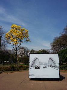 Ipê amarelo na praça da Liberdade clicado em 21.8.2017 por Beto Trajano.