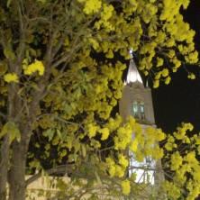 Ipê na igreja matriz de Bom Despacho (MG), clicado por Lucinha Castro em agosto de 2017.