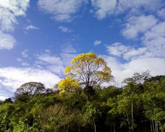 Foto tirada por Ipê Nunes em Patrocínio (MG), em ago/2009