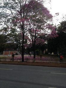 Foto de Rafael Duarte na praça da Liberdade neste inverno de 2015