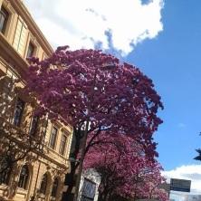 Clique de Rogéria Trajano na Praça da Liberdade. Ago/2917