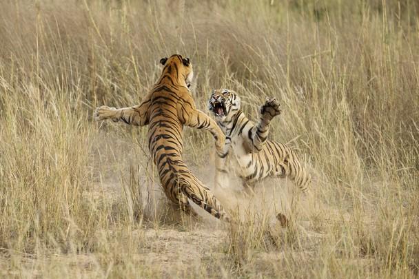 Foto de Archna Singh, na Índia.