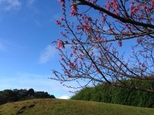 O céu de outono no no Jardim Botânico de Curitiba (PR), com cerejeiras em flor! Foto de Heitor Hayashi, em 20.6.2015