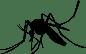 mosquito-1465064_960_720