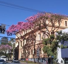Ipê na Praça da Liberdade, na esquina com a rua Gonçalves Dias. Clique de CMC em 28.6.2019