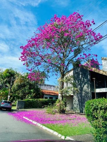 Foto de Angela Rocha Mello, enviada pela leitora Cassia Ferreira, tirada em Jardim Brasília, bairro de Resende (RJ), em 1.7.2019