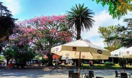 Foto tirada por Cássia V.F. de ipê em Colônia del Sacramento, Uruguai.