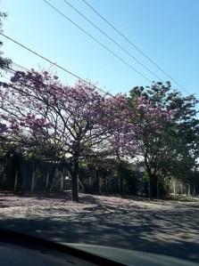 Foto clicada por Dea Carvalho.