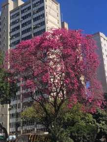 Foto de Deny Rose Viana na av. Afonso Pena com Santa Rita Durão.
