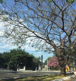 Foto de Jacinta Ferreira na av. bandeirantes, em São Paulo.
