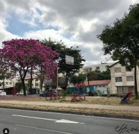 Ipê na av. José Cândido da Silveira, enviado por @photoschicom no Instagram (Francisco Martins).