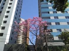 Foto de CMC na rua Ouro Preto, bairro Santo Agostinho.