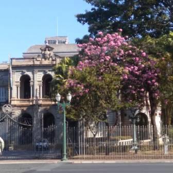 Ipê no Palácio da Liberdade, em BH. Foto: Patrícia Fiuza