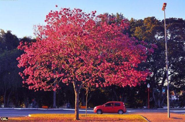 Clique de Otacílio Rodrigues, em Resende (RJ), no dia 19 de agosto. Foto enviada pela leitora Cássia Ferreira.